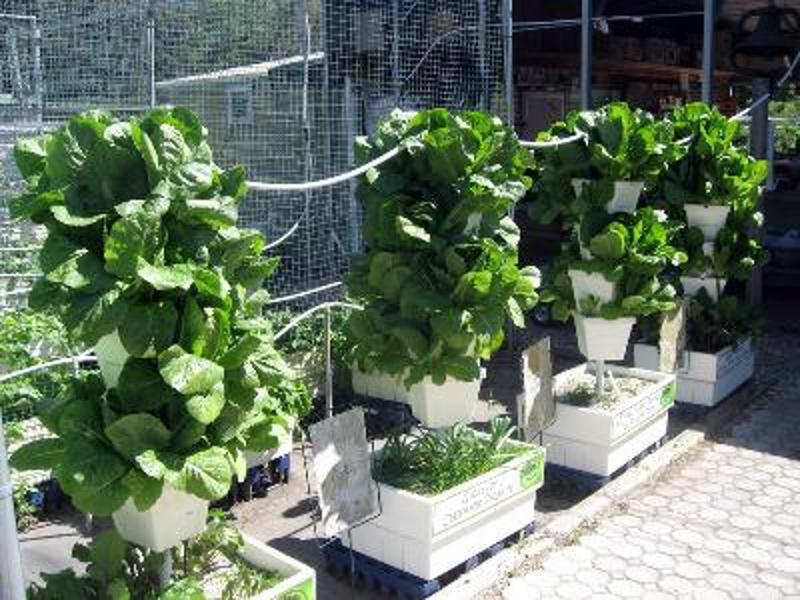 Hydroponic Gardening You Pick School Gardens You Pick Farm